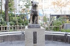 ハチ公が渋谷駅に毎日来ていた「知られざる」理由