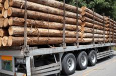 続く円安に見る日本林業再生のチャンス
