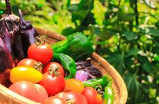 野菜嫌いは年収低い?野菜と日本人の関係