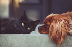 犬系女子・猫系女子の特徴とは?