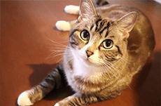 なぜ「猫」は集会を開くのか?