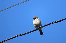 鳥はなぜ電線に止まるのか