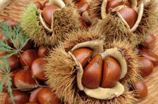 食べて強くなる、秋の味覚って?
