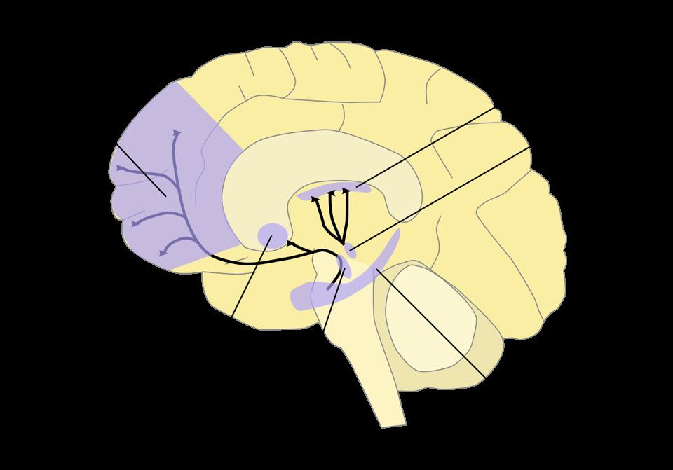 なぜ人類は進化したのか?…進化した脳の理性と情動