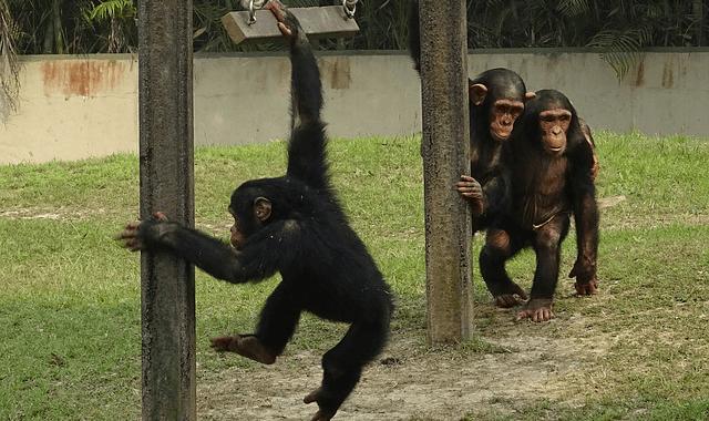 人間には動物とは異なる文化の仲間意識がある