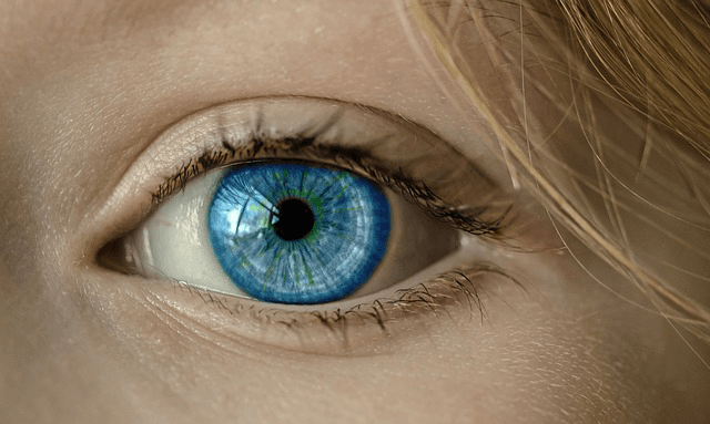 生態光学は肌理・空気・遮蔽でつくられた視覚論