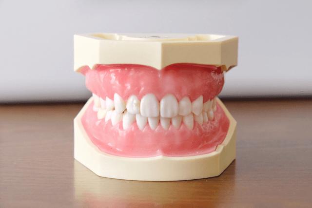 噛み合わせや歯の健康が人間の健康にとっていかに大事か